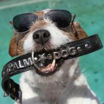 Cannes Film Festival 2020 : Palm Dog of Palm Dogs Goes To The Artist's Uggie